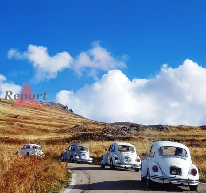 Maggiolini alla carica sulla Maielletta. Winter bugs in corso a Sulmona e dintorni
