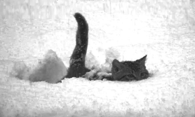 Maltempo. Contro Burian schierato, in prima linea, il Gatto delle Nevi
